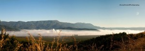 Sabie Valley Mist.